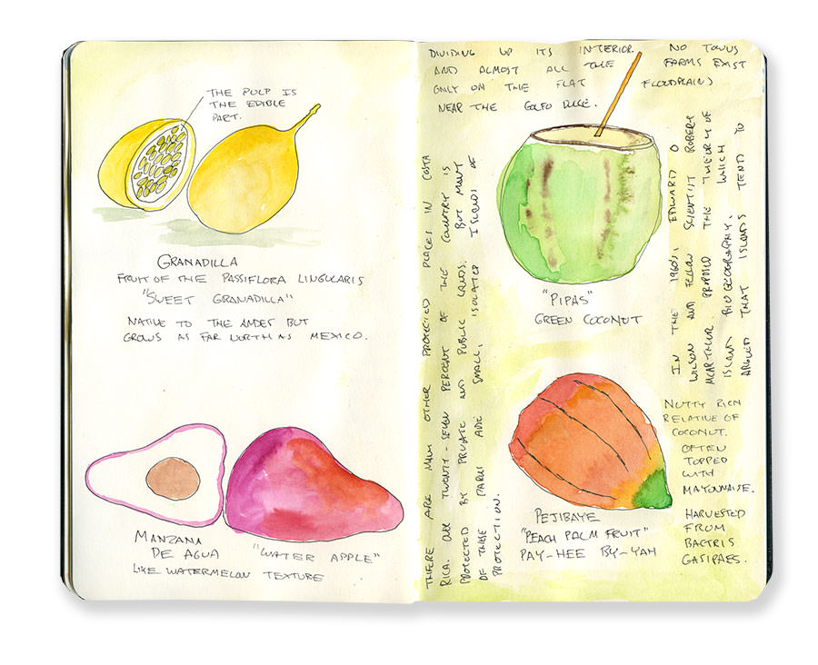 Costa Rica Sketches of Fruits