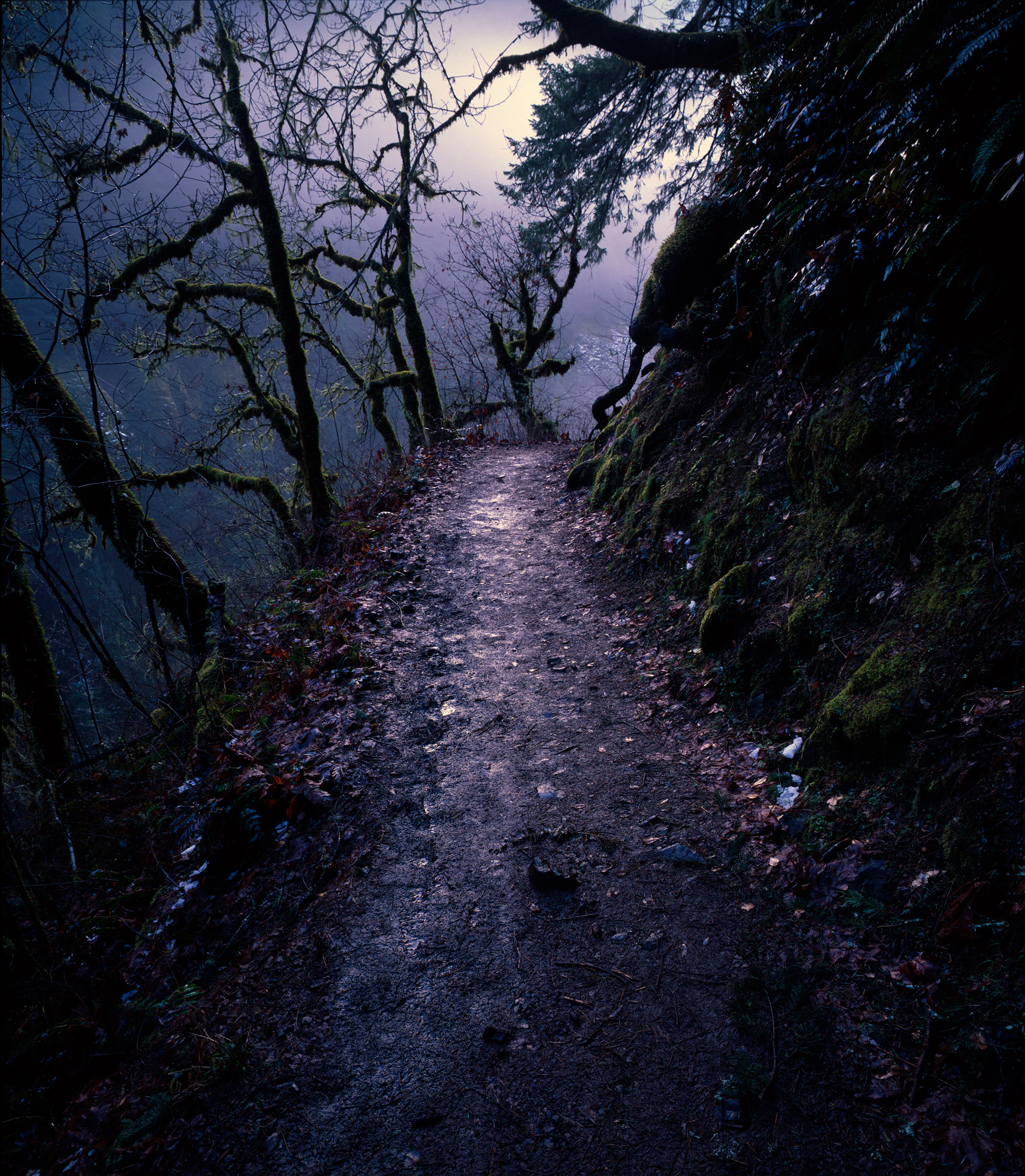 Image of the Eagle Creek Trail in the Columbia River Gorge, within the vicinity of Portland, Oregon.