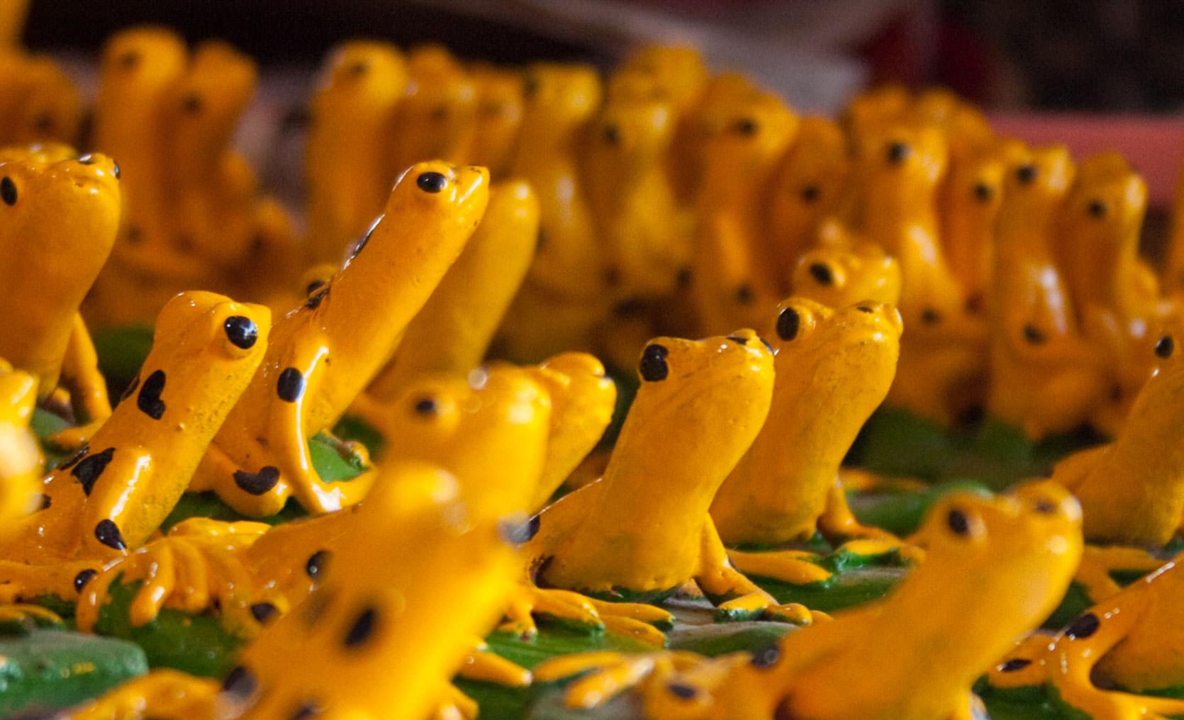 Bricks For Sale >> El Valle de Anton | The Wise Glass Frog of El Valle de Anton
