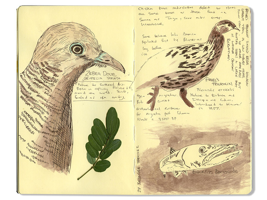 Zebra Dove and other Birds, Kauai Moleskine