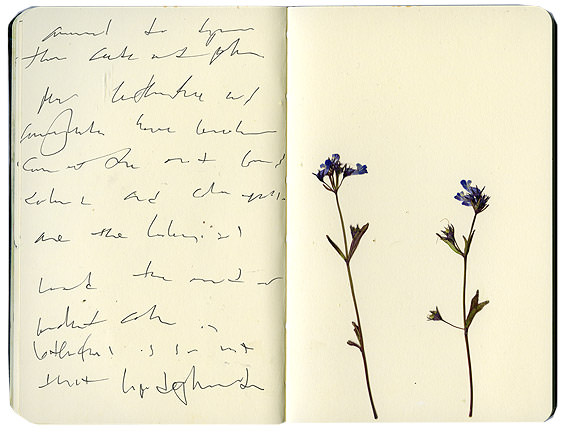 Blue flowers in sketchbook