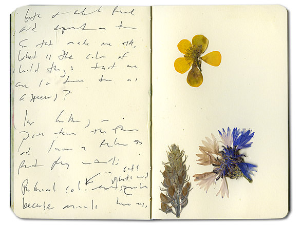 How to preserve flowers in a book