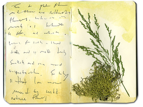 Moss and Grass in Moleskine Notebook