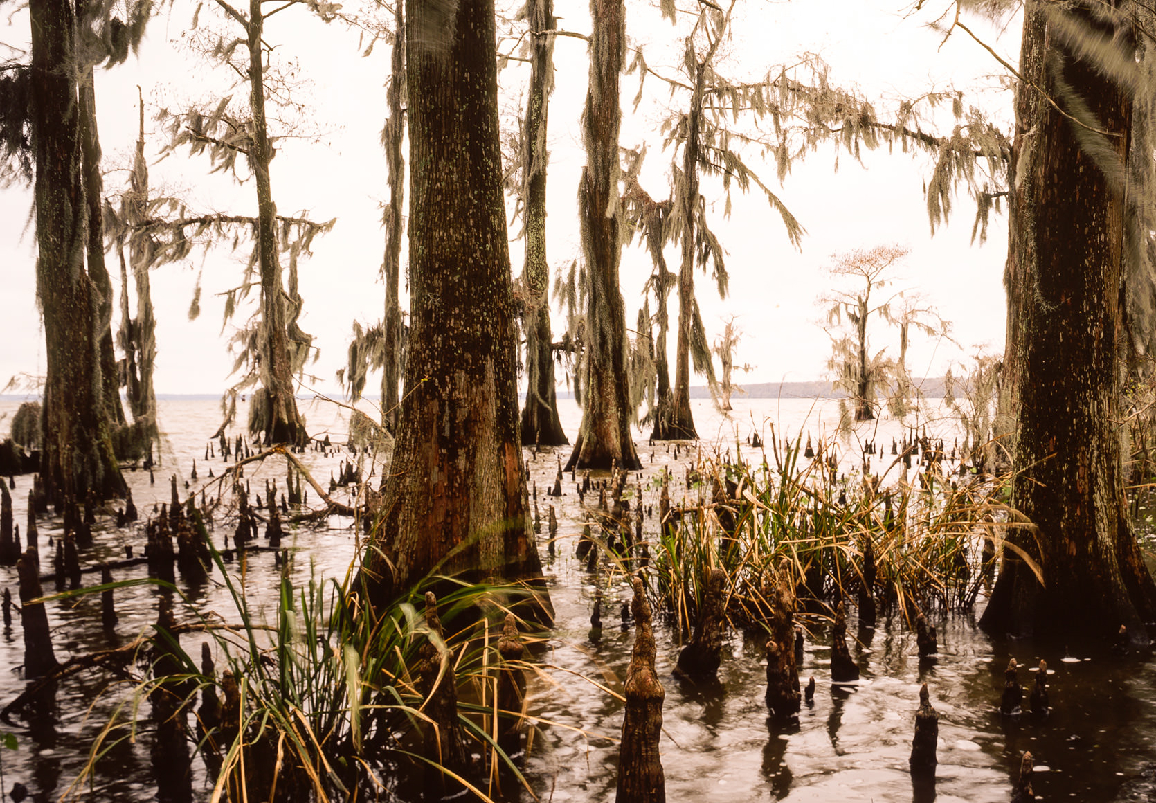 Photo of the Atchafalaya bayou in the morning.