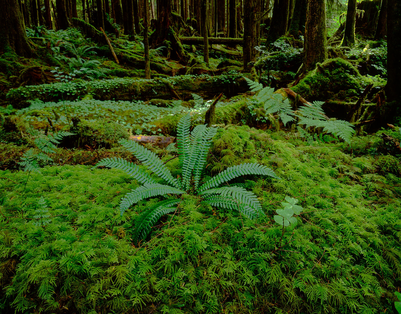 Neah Bay Forest