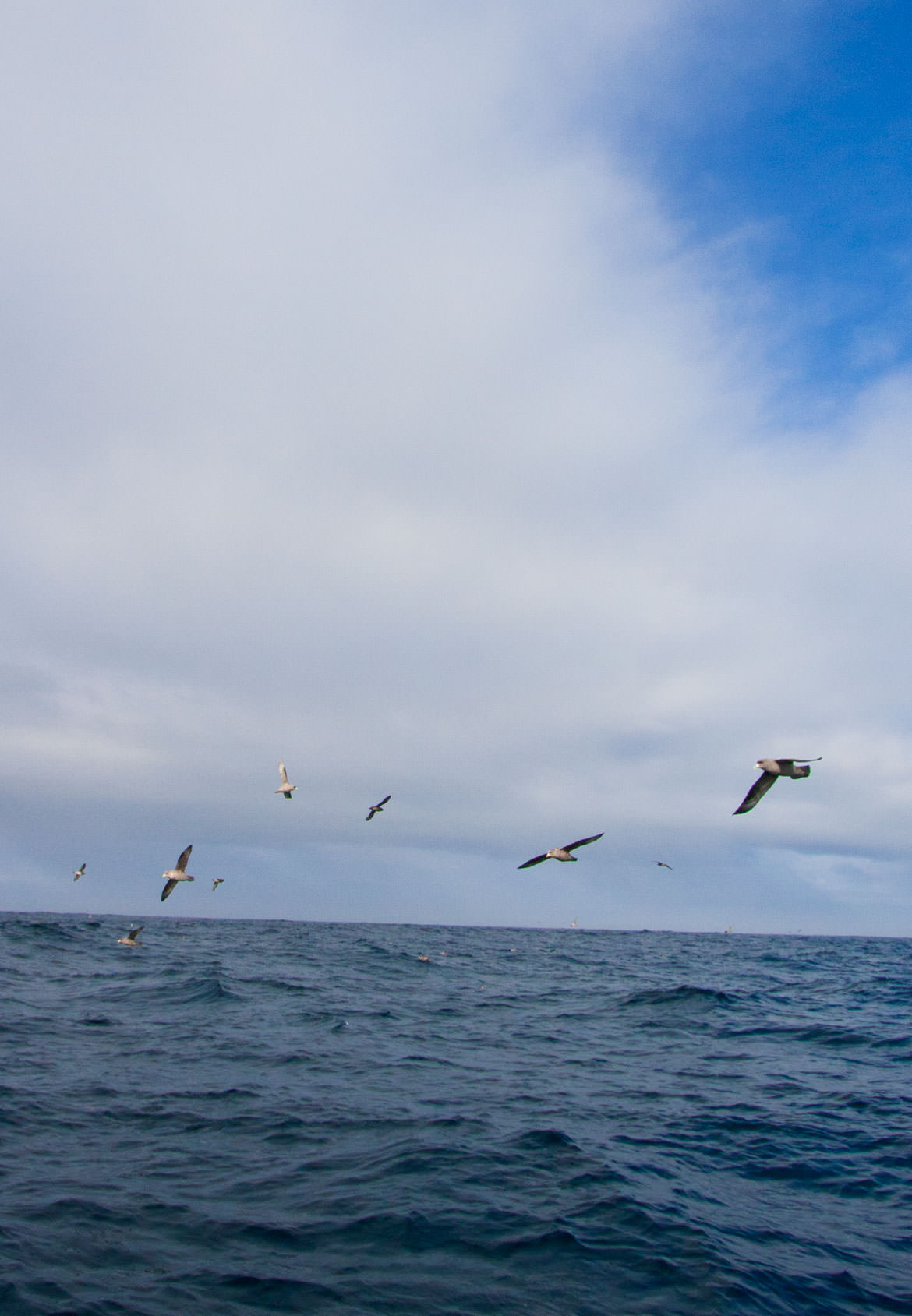 Pelagic Birding off the Oregon Coast