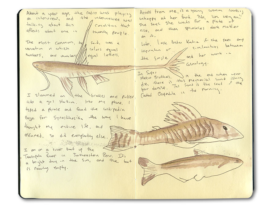 Sketch of Jungle Fishes in the Tambopata River