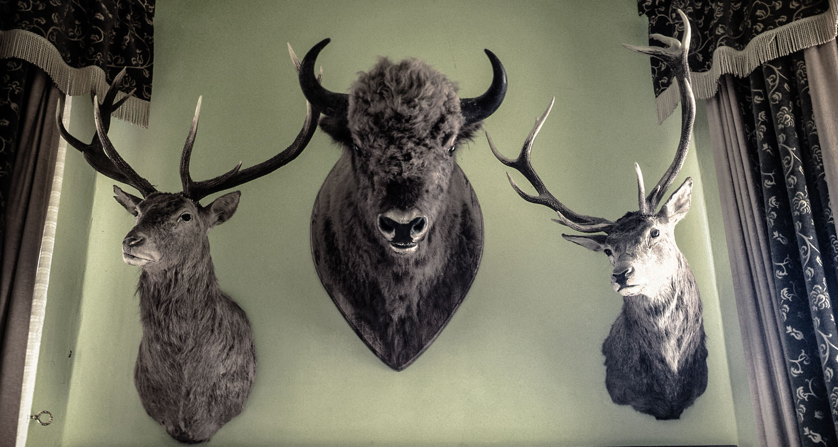 Moose and other animals displayed in Pomerania Hotel