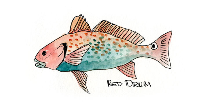 Red Drum Painting