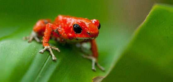 Reptile Life List