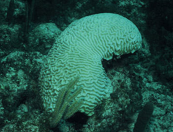 zooxanthellae and coral relationship trust
