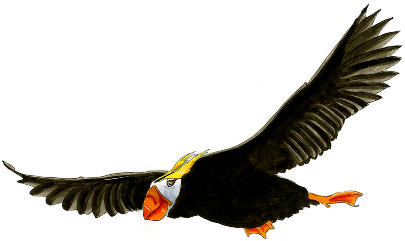 Tufted Puffin Bird Sketch